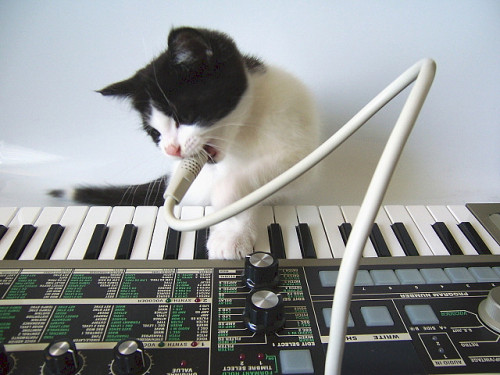 Convoy the Cat by Matrixsynth on Flickr.