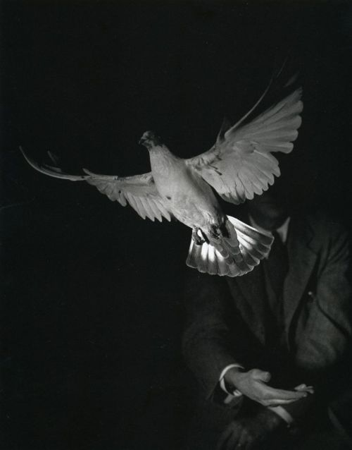 And still a marvel. thanks to liquidnight : Harold Edgerton Rising Dove, 1934 From Stopping Time : The Photographs of Harold Edgerton Previously posted in smaller form.