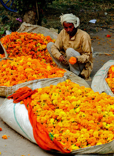 nikonstew:  Agra Marigold Vendor (by Tom Kilroy)