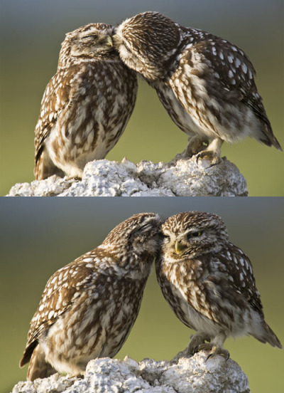 batmobiles:  lizabethe:  that awkward moment when owls have a better love life than you.   -..- word