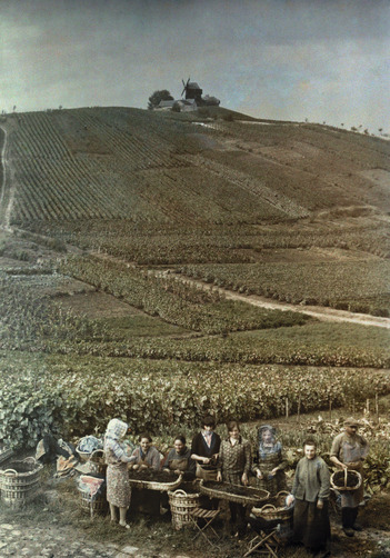 A group of farmers prepare grapes for transportation. Location:Verzenay, Marne, Champagne, France.Photographer:GERVAIS COURTELLEMONT/National Geographic Stock