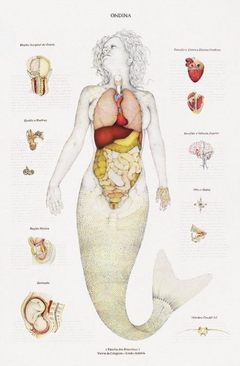 The Mermaid Autopsy By Walmor Corrêa Oh Science.