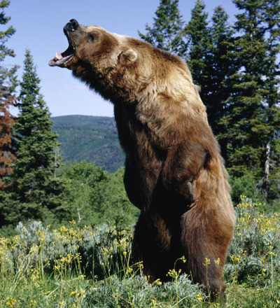mothernaturenetwork:  How to survive a bear attackFollowing an unusually big year for bear attacks, here's a look at how to meet a black, brown or polar bear and (hopefully) come out alive.