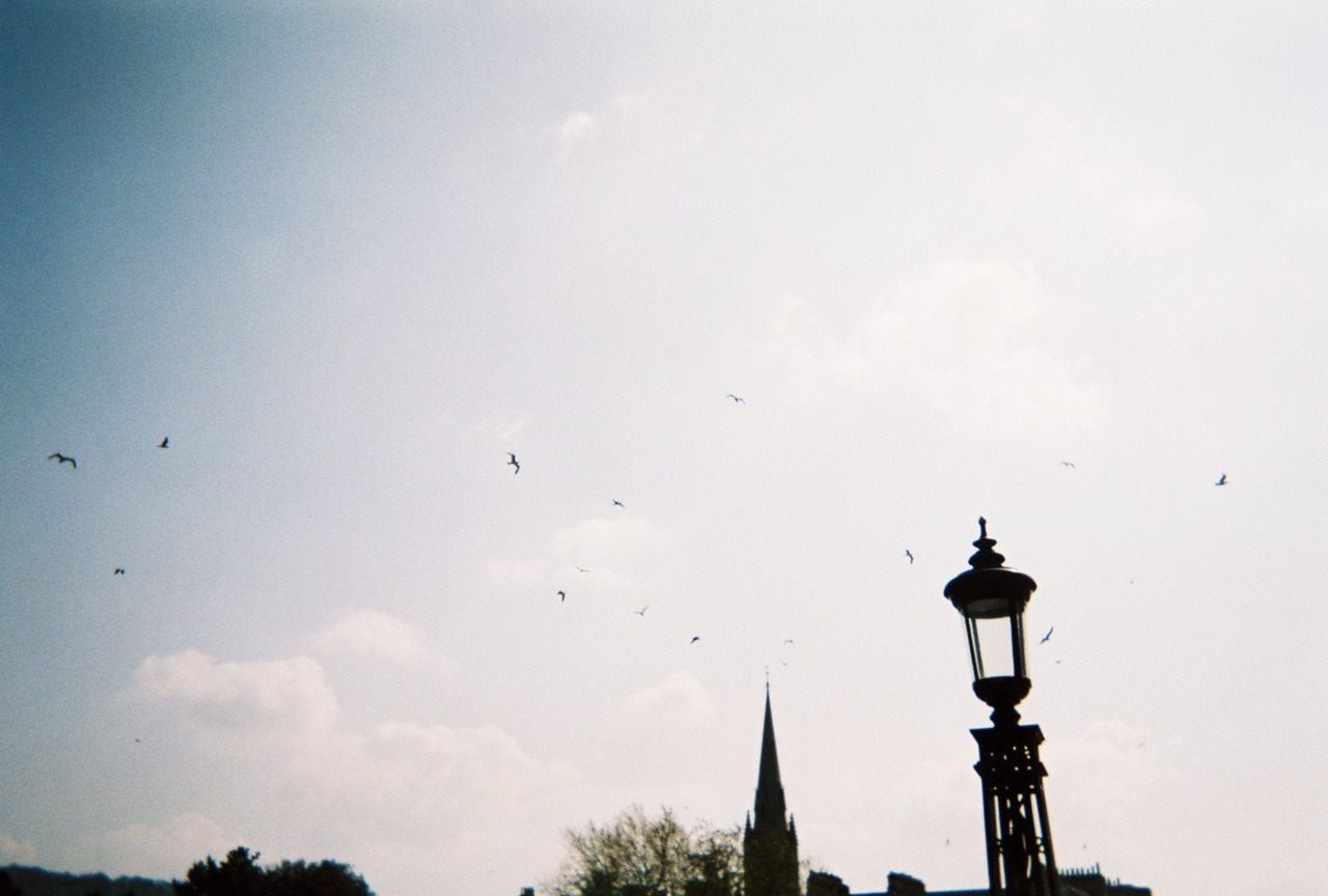 Birds in the sky | London, England