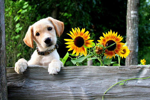 residualrandomtarian:  Dear Little Puppy, You made me smile today. Thank you. Love, Me