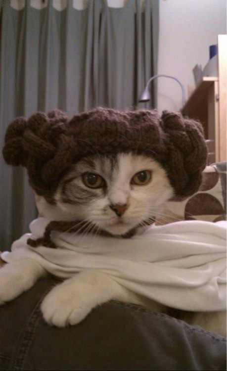 theforce:  Princess Leia is now a cat