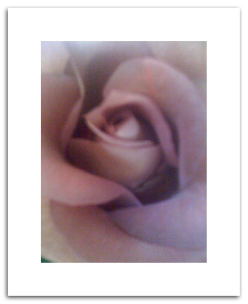 ——HOT off the press at WetINK——  Roses by Tammy Fernandes