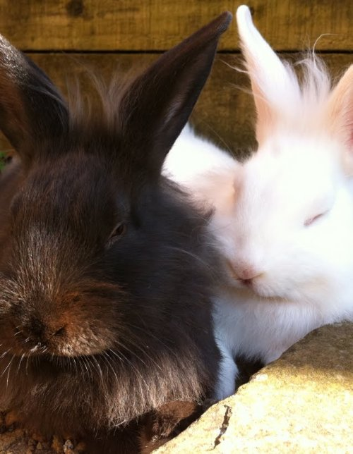 dailybunny:  Thanks, Heather!