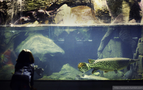 A kid and aquarium.