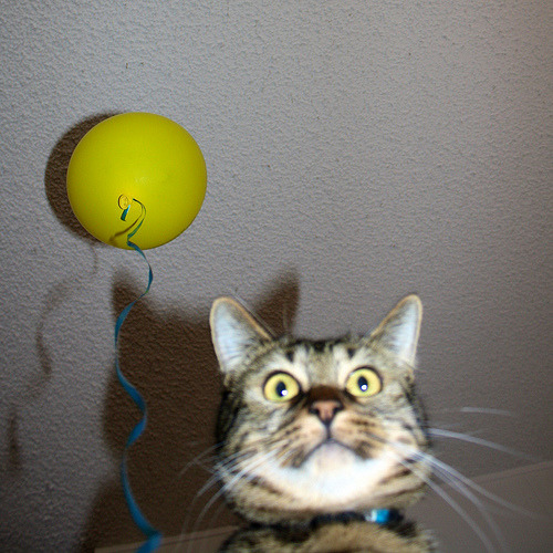 """OMG! Can't find my balloon! Where's my balloon?! Did you see my balloon?!"" Photo by Klara Kim"