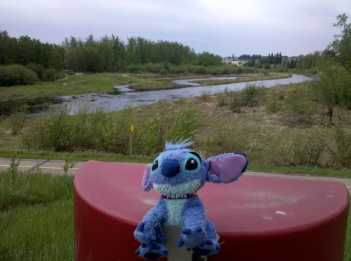 While walking around St. Albert, Alberta, CA we stopped to check out the Sturgeon River, the area had some really great paths to wander!!