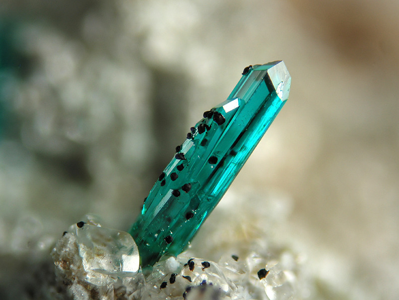 inlovewithgeosciences:  Dioptase, CuSiO3 . H2O Locality: Arizona, USA