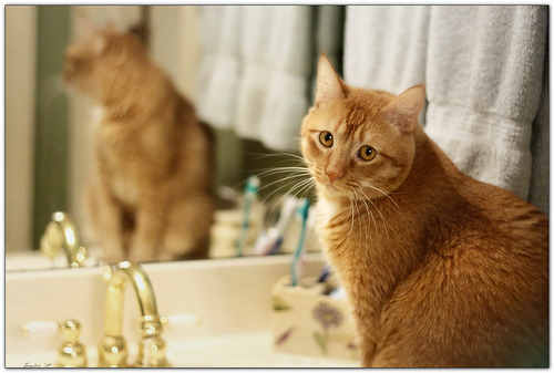 """I used your toothbrush… Sorry…"" Photo by Mr. Greenjeans"