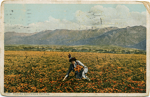Postcard: Picking California Poppies. (by leucanthemum b)