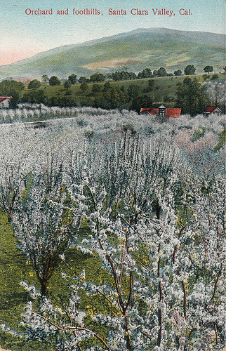 Postcard of orchards and foothills, Santa Clara Valley, California. (by San Jose Library)