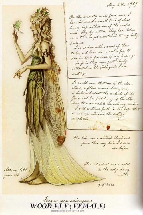 thefae:  Female Wood Elf by Tony DiTerlizzi