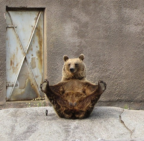yoga bear (source unknown)
