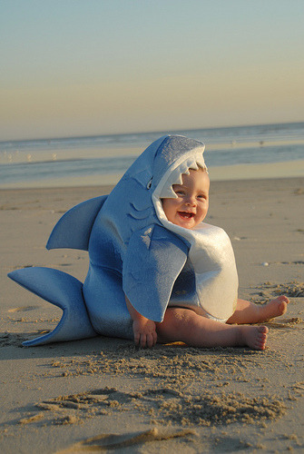 conflictingheart:  cutest shark I've ever seen
