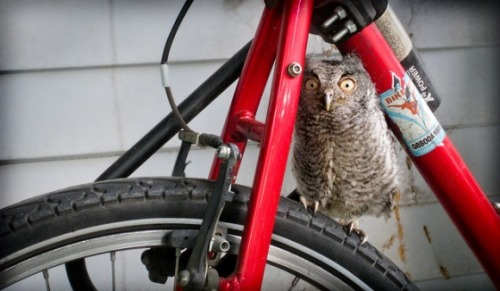 mach20:  A Bicycle Built For Whooooooooo via Cuteoverload