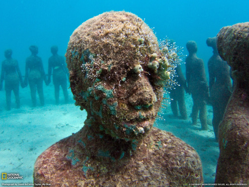 I've known about Grenada's underwater sculpture park for years, but I've never been. Until I saw this photograph, I had no idea what I was missing. BRB, signing up for SCUBA lessons. (Source: Jason deCaires)