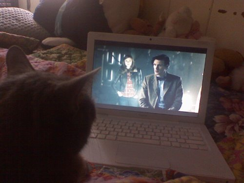lixxx:  my cat loves to watch doctor who :3   <3
