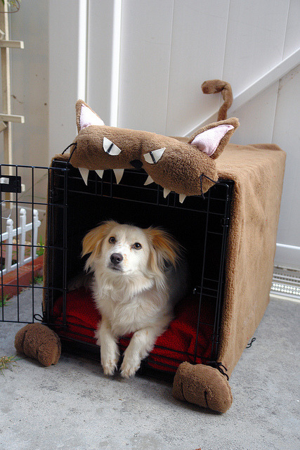 Dog cage with cat cover. What an irony!  www.chikorimasou.blogspot.com