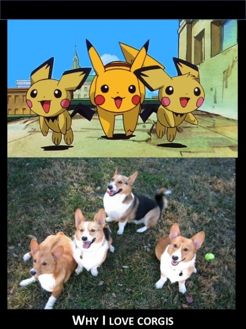 corgiaddict:  drivingmisslily:  I have discovered the origin of my corgi love!  i know dr. dr. pikachu approves of this statement.   It. All. Makes. Sense.