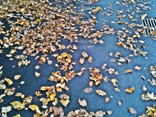 Autumn Leavesphoto by melissa