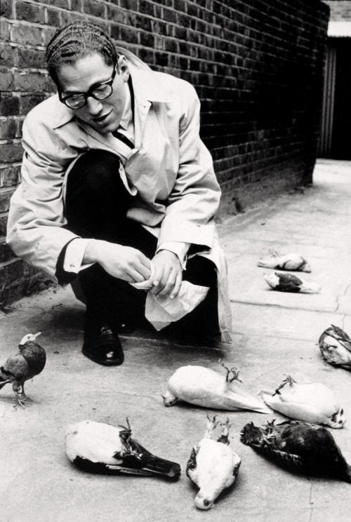 You're Not Eating, Tom Lehrer poisoning pigeons, by Norman Parkinson, 1959