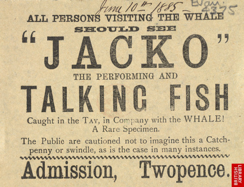 "~ ""Jacko"" The Talking Fish, 1885 via the British Library""The Public are cautioned not to imagine this a Catchpenny or swindle…""More information on ""Jacko"" can be found at The Cat's Meat Shop"