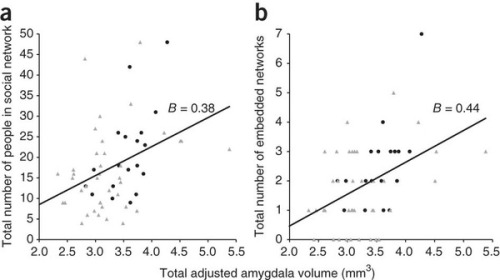 "Amygdala volume correlates with the size and complexity of social networks in humans Evolutionarily, one of the most important social challenges is to be able to distinguish between friend and foe, which can aid in survival. The social brain hypothesis, which suggests that living in larger and complex social groups selected for larger brain regions capable of performing relevant computations. One of these brain regions is the amygdala, a critical structure for learning, memory and emotion that has been implicated in mood disorders, social behavior, and interpersonal relationships (i.e. mother-infant interactions). Because of its central functional role and anatomical position, the authors proposed that amygdala volume should be associated with size of social network (size is typically considered an indicator of processing capacity. Moreover, neuroimaging studies done in nonhuman primates have supported this association between an enlarged amygdala and larger social groups.Thus, there is a notion that a larger amygdala volume enables increased processing of social demands that form part of life in a social group or hierarchy. In a 2011 study, Bickart et al. examined whether amygdala volume varies as a function of individual variation in the size and complexity of social groups within humans. The group examined the social networks, the number of people that the individual maintains or ""regular contacts"" (also an indication of overall network size), in approximately 58 healthy adults (healthy= absence of DSM-IV diagnoses). The group also employed another social scale to measure the number of different groups that the contacts belonged to, reflecting network complexity. Furthermore, the performed quantitative morphometric analyses of MRI data. According to Bickart, linear regression analyses revealed that subjects with larger and more complex social networks had larger amygdala volume (even when controlling for variables such as age) with no lateralization of effect. The group found no significant differences in other non-social brain structures like the hippocampus and other subcortical structures.  Sources: Bickart, et al. (2011). Amygdala volume and social network size in humans. Nature Neuroscience. 14:163-164. doi:10.1038/nn.2724 Image: http://www.nature.com.ezproxy.med.nyu.edu/neuro/journal/v14/n2/fig_tab/nn.2724_F1.html"
