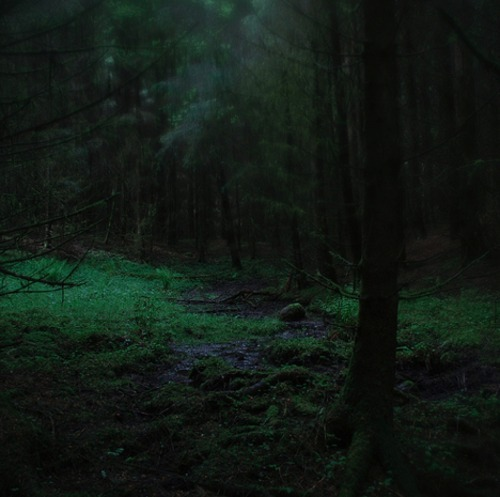 ominousplaces:  Forest. Photo by Coyhand.