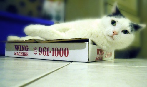 get off of there cat. you cannot lay on that box. you are not a wing machine. you eat wings not make them and those are two very different things cat, especially considering you're not allowed to eat wings anyway.