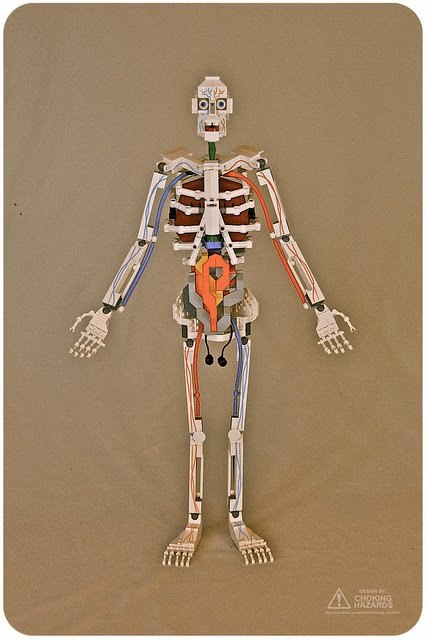 Anatomical model made of Lego by Caly Morrow (Super Punch)