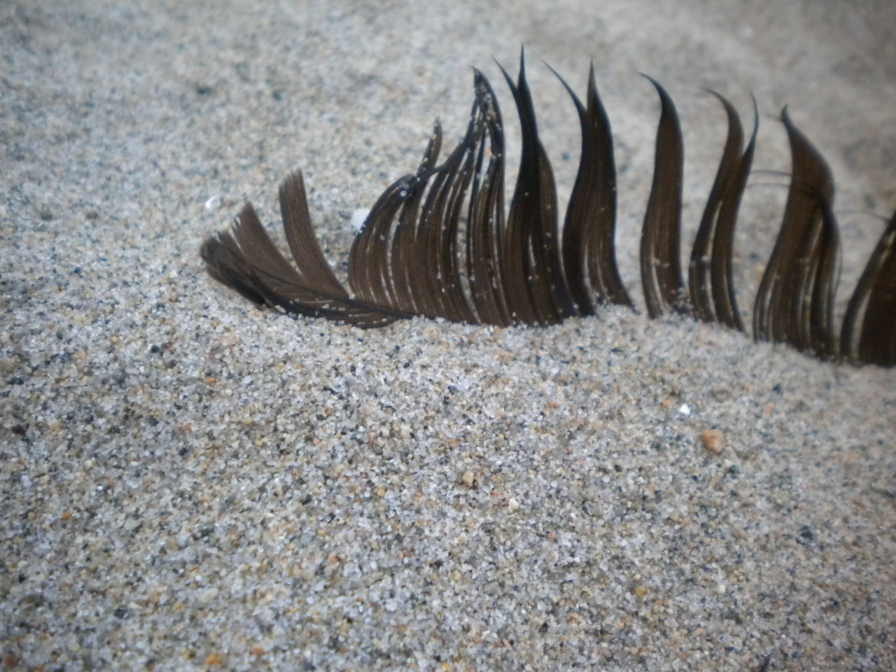 Feather in the Sand | Magnolia, MA
