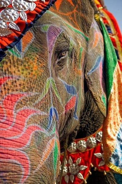 happyhues:  Woah, look at this cool elephant, decked out for Holi! Check out these other colorful pics celebrating the colors of India! (via Dreaming of India)