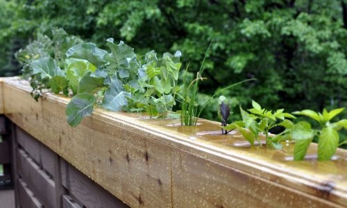 urbangreens:  Submitted by highviewcreations:  A hydroponic railing we built for a client.