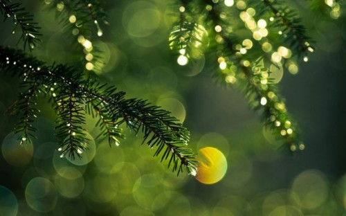 (via Pine Needle Wallpaper)