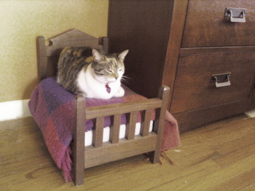 izkyoot:  cat in a doll bed  画