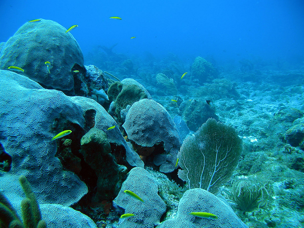 Image description: Seventy-five percent of the world's coral reefs are currently threatened by local and global pressures, according to a 2011 analysis. The most immediate and direct threats arise from local sources, which currently threaten more than 60% of coral reefs. Local threats include impacts from fishing, coastal development, and pollution. Left unchecked, the percent of threatened reefs will increase to more than 90% by 2030 and to nearly all reefs by 2050. Photo by the National Oceanic and Atmospheric Administration's National Ocean Service