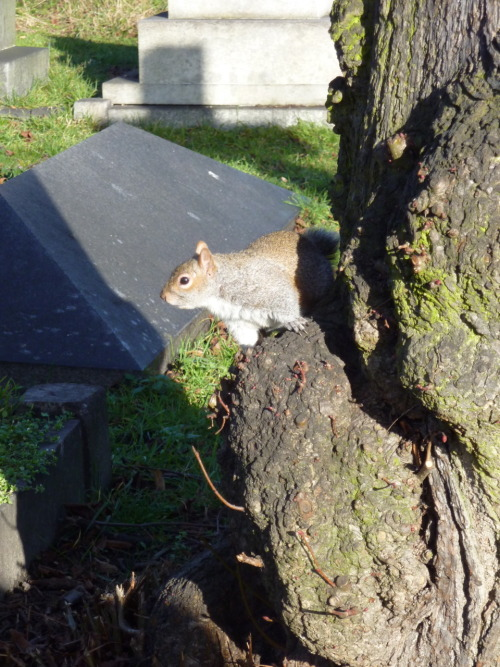 Cemetery squirrel does his best to look grave.  (Brompton Cemetery, 2011)