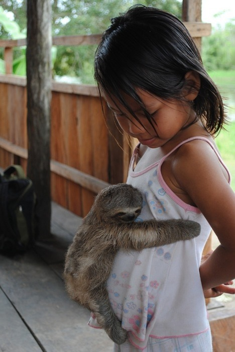 izkyoot:  cutest thing you have ever seen (little girl hugged by a baby sloth)  画  wauauaughhhslothiloveyou