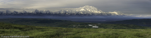 Denali Dawn on Flickr.Via Flickr: A 7 image panorama of the view from our tent in Denali National Park Alaska. This brief view of Denali (Mount McKinley) was the best that we had on our 4-day backpack. The mountain is frequently covered in cloud and this summer was particularly cloudy and rainy in Alaska.  Here's a link to where you can zoom in on a full resolution version (16074 x 4108 = 66Mb) of the photograph.Very High Resolution: www.marcshandro.com/panoramas/Denali_Dawn.htm