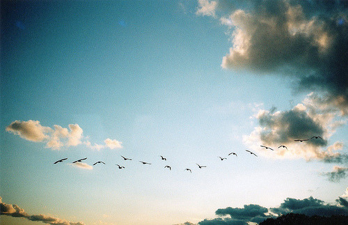film-grain:  (by francesca way)