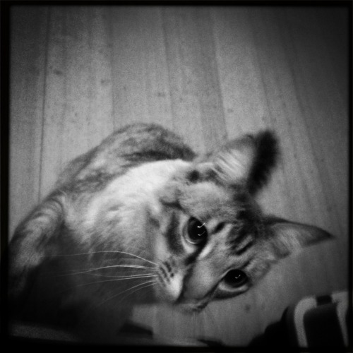 Lucifer VI Lens, BlacKeys SuperGrain Film, No Flash, Taken with Hipstamatic
