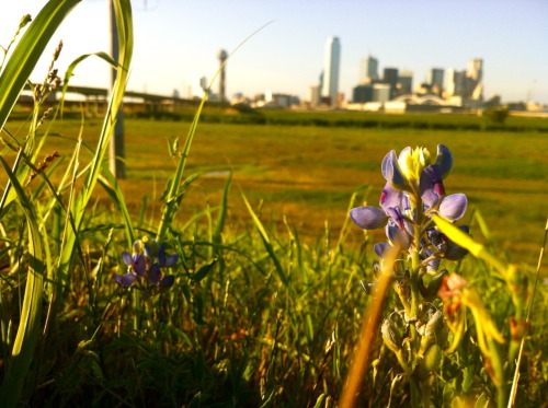 Dallas, Texas. <3 Wlaked through the biggest field of pokey brush in order to reach this place. So. Worth. It. Wish I had my Camera and not just my iPhone. Not bad  for a phone pic though.