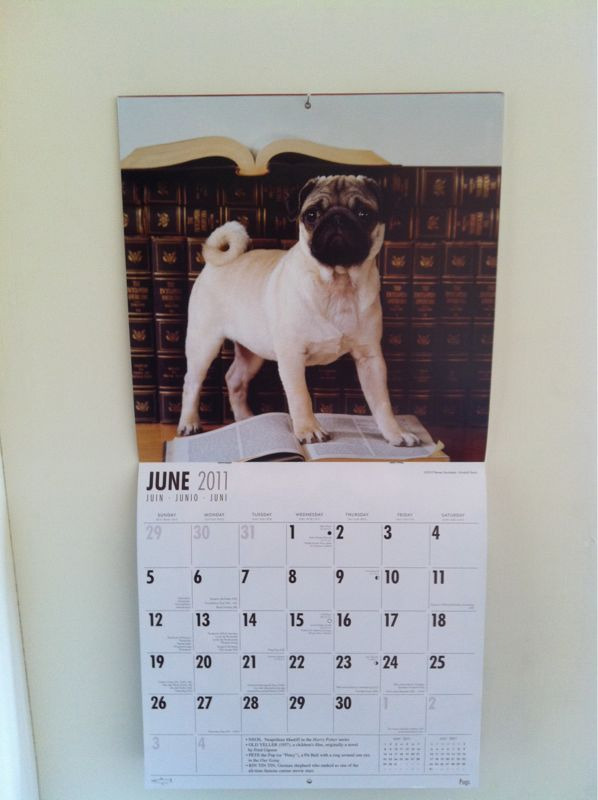 Best month on the pug calendar by far