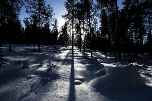 Finland's finest snow wonder © Rob Watkins 2005 by Aland Rob on Flickr.