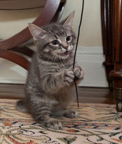 nationalpost:  What would you name Prime Minister Stephen Harper's new cat? Looks like Stanley is an early front-runner, followed by Earl Grey.