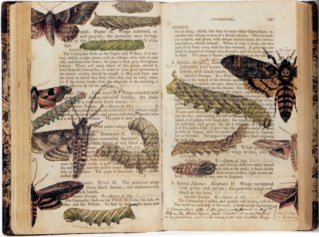 scientificillustration:  A copy of 'Elements of the Natural History of the Animal Kingdom' with watercolour additions by Albin Burt (1784-1842). Sold at Sotheby's in 2002 at a Natural History, Travel, Atlases and Maps auction.